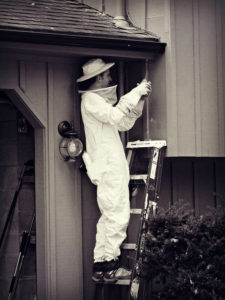 Cost of Termite Inspection