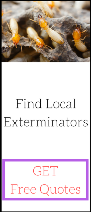 The Full Termite Treatment Cost u2013 Professional  sc 1 st  Costculator & Termite Treatment Cost and Inspection Cost Guide
